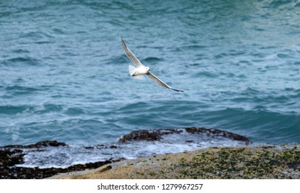 Wild life seagull bird flying