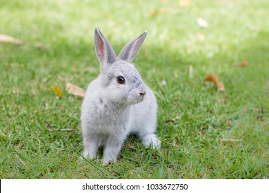 Wild little grey bunny rabbit sitting on grass looking at the camera