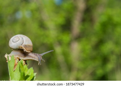 Wild little snail closeup in the green forest with blurred background. Spring nature