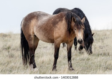 Wild mare mustang horse standing