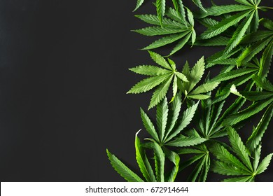 Wild marijuana isolated on the black background.