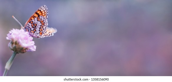 Wild meadow, butterfly and blooming flower nature macro. Pastel colors background with copy space. Soft focus, panoramic view