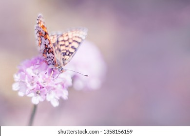Wild meadow, butterfly and blooming flower nature macro. Pastel colors with copy space. Soft focus, blurred background