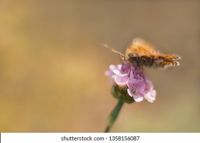 Wild meadow flower with butterfly on blurred nature background. Unfocused gentle artistic image with pastel colors. Copy space.