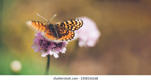 Wild meadow flower with butterfly on nature background. Gentle image with pastel colors. Copy space, panoramic view. Soft focus