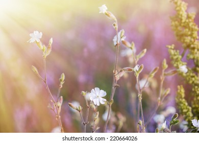 Wild meadow flower - white flowers