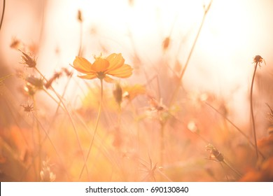 wild meadow flowers on morning sunlight background. Autumn field background