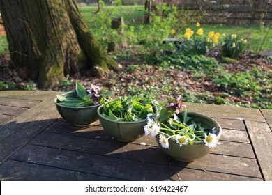 Wild meadow herbs ready for spring salad. Aegopodium, Plantago Taraxacum, Bellis. The leaves of dandelion and plantain, nettle flowers and daisies in ceramic bowls on a wooden table in the garden