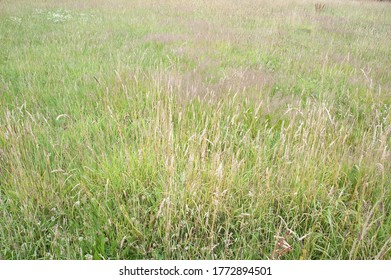 wild meadow left to nature in english rural summer