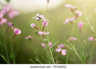 wild meadow nature beautiful spring flowers. Fresh morning outdoor photo