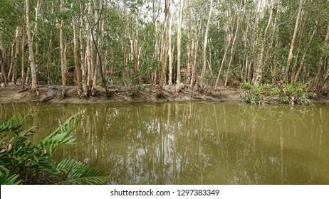 Wild Melaleuca wetlands infested with saltwater crocodiles floating at the surfance - World Heritage Queensland Wet Tropics - Daintree National Park