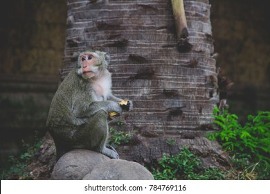a wild monkey enjoys his food from a tourist