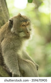 Wild monkey sitting on tree branch looking sad with nature jungle background. Wildlife conservation campaign.