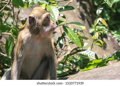 Wild monkeys in the forest are looking for food.