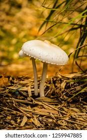 wild mushroom growing in queensland, the light was exquisite