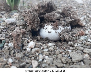 Wild mushroom growing under earth