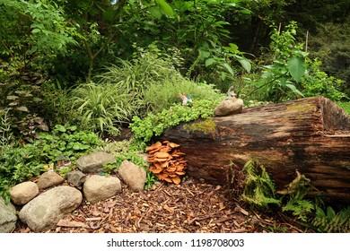 Wild mushrooms growing in a beautiful park. Summer season.
