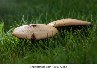Wild mushrooms growing in a grassy forest field.