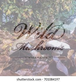 Wild Mushrooms Typography Design