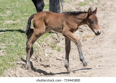 Wild mustang foal along Pony Express