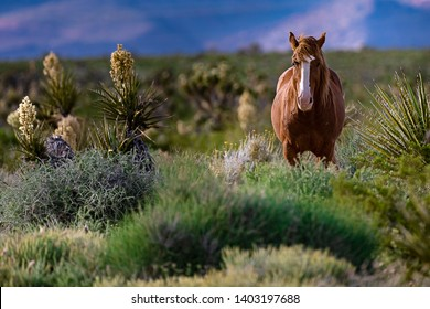 Wild Mustang Horse in The Desert