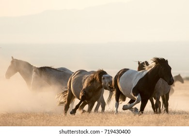 Wild mustang horses playing in the desert