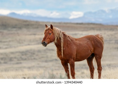 Wild mustang stallion Kenya and mountains