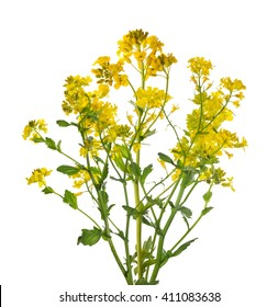 Mustard Plant Images Stock Photos Amp Vectors Shutterstock