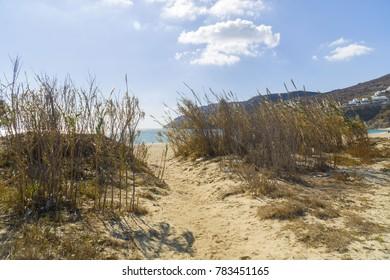 Wild natural beach in Mykonos island. Escape in secret spot in the beatiful beach grass, sunny summer day