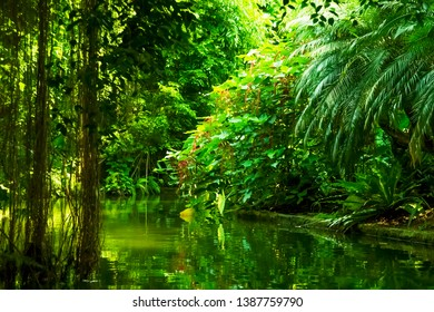 The wild nature. Beautiful landscape of  tropical forest with the river.