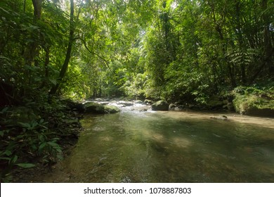 Wild nature Near Waterfall  forest prolific ,in Phang Nga National Park, Thailand