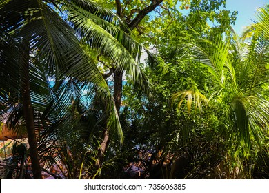 Wild nature of Praslin island. Forest of Seychelles on the trail from Anse Lazio to Anse Georgette beaches