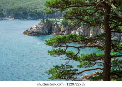 Wild nature of Russia. Bay in the Sea of Japan on a summer day. Sea view. Seascape with rocks and pine tree. Far East. Primorsky Krai. Vladivostok. tourism and landmarks in Russia. Wildlife.