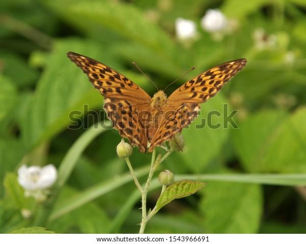 Bộ sưu tập cánh vẩy 5 Wild-on-flower-butterfly-sitting-600w-1543966691