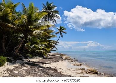 wild palm trees