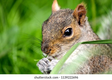 Wild park squirrel
