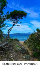a wild path leads to a heavenly sandy cove on the idyllic island of Porquerolles