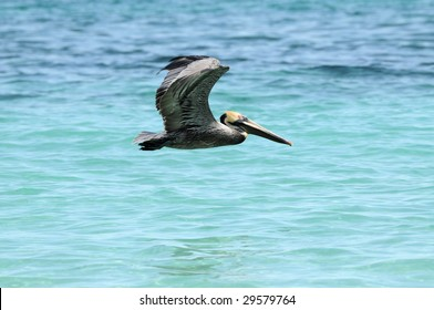 Wild pelican flying over blue sea water