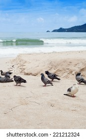 Wild pigeons at the beach with sea in background