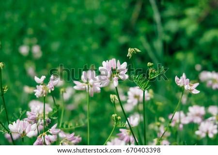 Wild pink flowers green grass tinted stock photo edit now wild pink flowers in green grass tinted stylish photo mightylinksfo