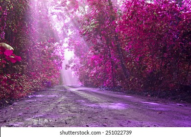 Wild pink with love in valentine day,Road in green forest with sunlight in the morning,Pink fantasy style