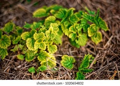 Wild plants - nature