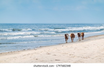 Wild pony on the ocean coast at Assateague State Park