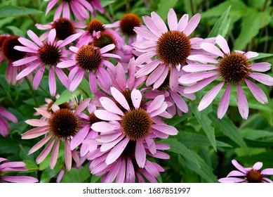 Wild Purple Pink Flowers Field