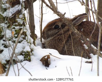 Rabbit Woods Images, Stock Photos & Vectors | Shutterstock