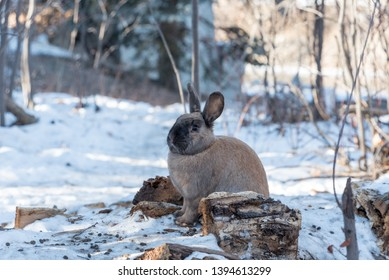 Rabbit Canada Images, Stock Photos & Vectors | Shutterstock