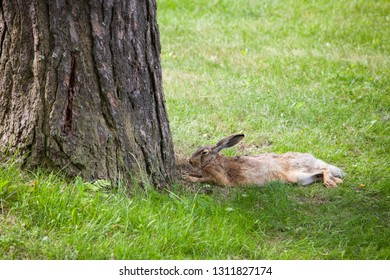 Wild rabbit on grass at summer day
