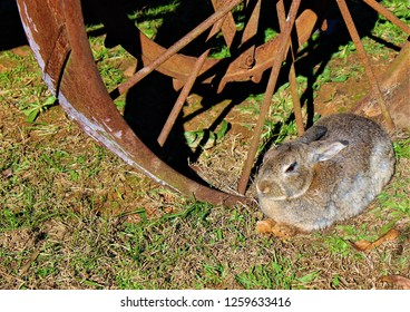 A wild rabbit resting in the grass near an old wagon wheel.