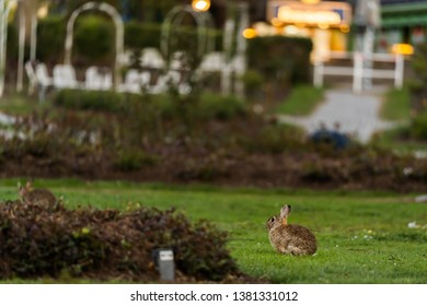 wild rabbits sitting on a meadow in the City of Munich Germany