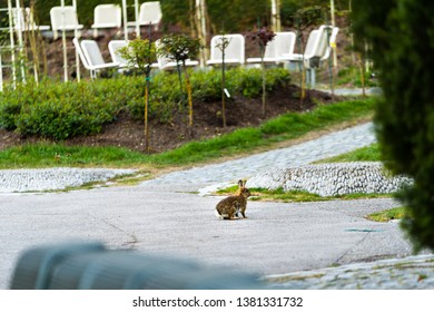 wild rabbits sitting on the walkway in the City of Munich Germany